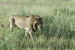 KA6P6782 Botswana, Okavanga, Game Park, Safari