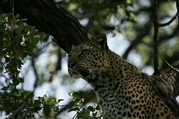 KA6P6574 Botswana, Okavanga, Game Park, Safari
