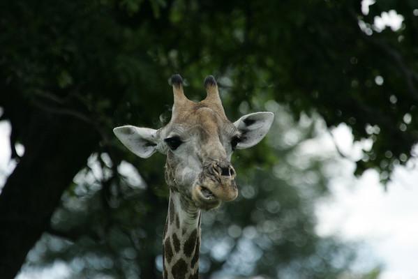 KA6P5388 Botswana, Okavanga, Game Park, Safari