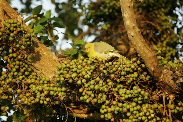 KA6P6501 Botswana, Okavanga, Game Park, Safari