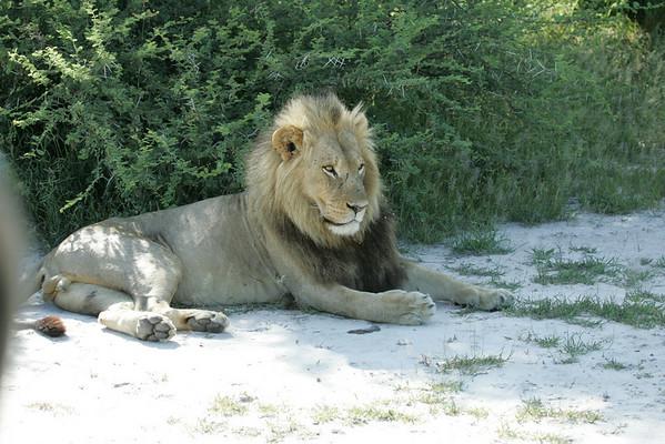 KA6P6882 Botswana, Okavanga, Game Park, Safari