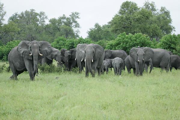 KA6P5100 Botswana, Okavanga, Game Park, Safari