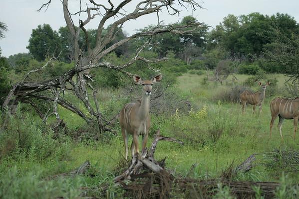KA6P6234 Botswana, Okavanga, Game Park, Safari