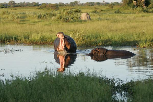 KA6P6758 Botswana, Okavanga, Game Park, Safari