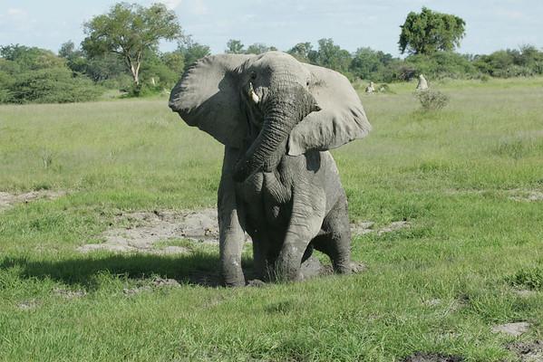KA6P6630 Botswana, Okavanga, Game Park, Safari