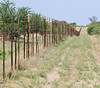 "100_7715<br /> One of many veterinary fences intended to stop  ""foot and mouth"" disease from spreading from wild animals to the beef cattle. Required by the European Union before they would import Botswana beef. Very controversial."