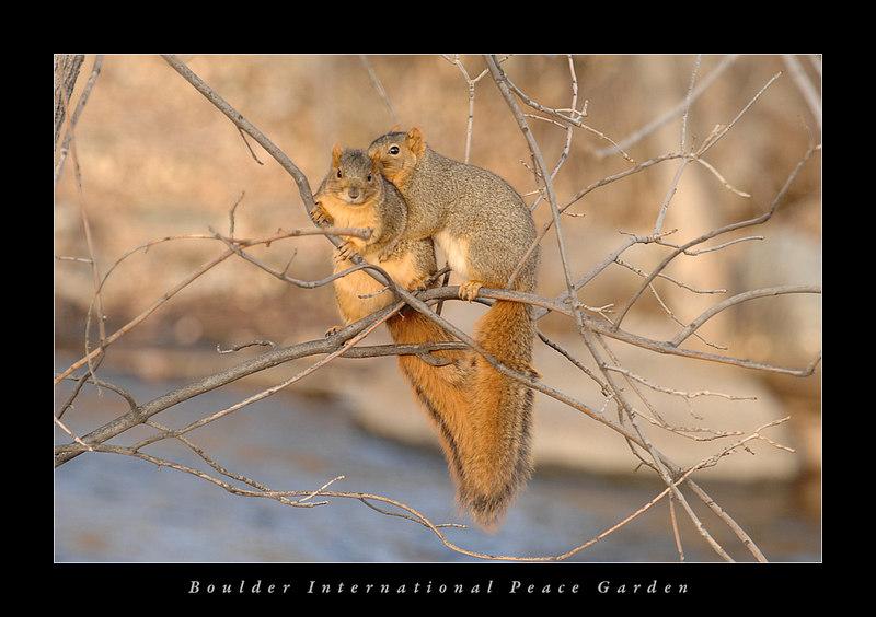 Critters at Boulder International Peace Garden