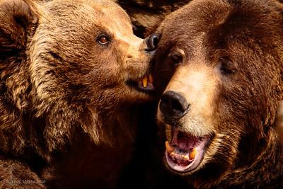 real bears, really
