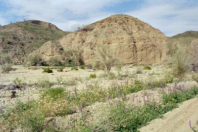 2/6/05 Mecca Hills Wilderness: wash on north (right) side of Box Canyon Rd. (across road from Little Box Canyon Trailhead), west of Meccacopia Trail & east of Sheep Hole Oasis Campground