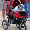 Owns said dog's name is Athena:)
