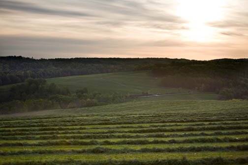 farm1147lo