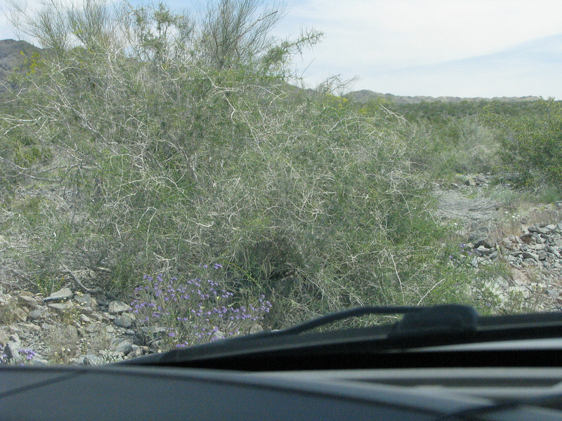 Lots of Mesquite and some blue flowers.
