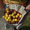 fruits of Brandenburg