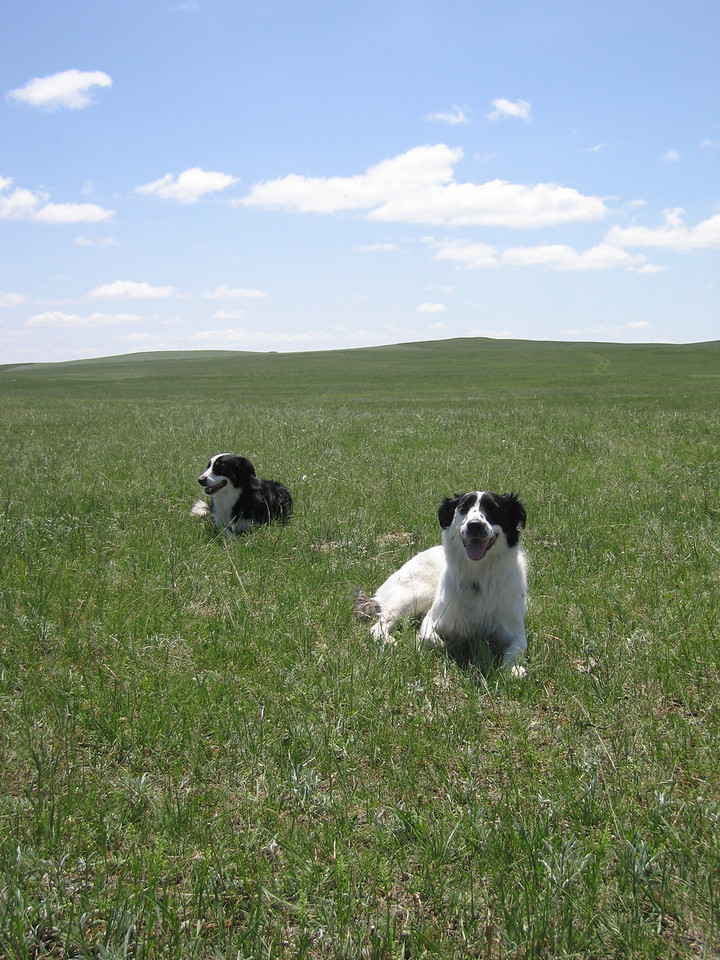 Scout and Jett on the prairie