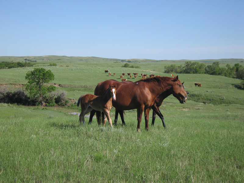 Kelly's mare and new foal