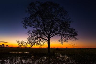 Dawn @ #Pantanal #Brazil