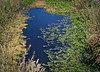 "This is a small bog or pond, I was walking over a small walking bridge.<br /> This picture was done in Photomerge in Photoshop, here is a link to additional Photomerge pictures.  <a href=""http://paws4camera.smugmug.com/Photography/Photo-Merge/12427288_o6o9t#889516217_PjjwY"">http://paws4camera.smugmug.com/Photography/Photo-Merge/12427288_o6o9t#889516217_PjjwY</a>"