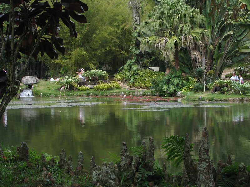 117 Tropical Pond