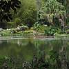 117 Tropical Pond