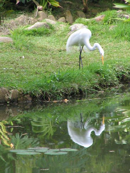 115 Egret at the Pond