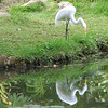 115 Egret at the Pond