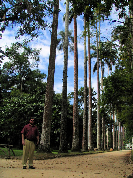 120 Imperial Palms