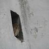Owl Nook