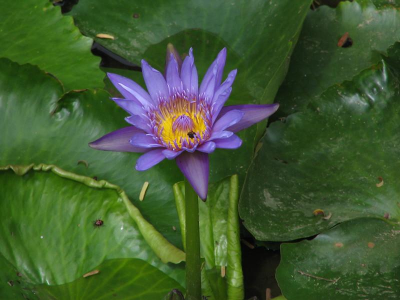 119 Purple Flower