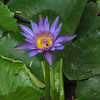 119 Purple Flower
