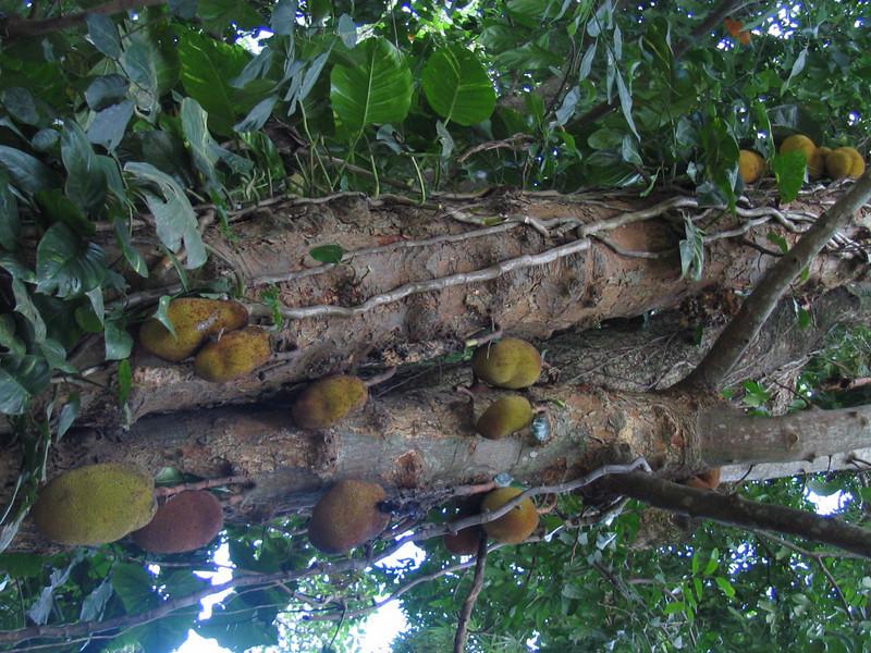 125 Heavy Fruit