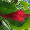 128 Flame Blossom