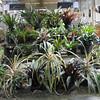131 Bromeliads
