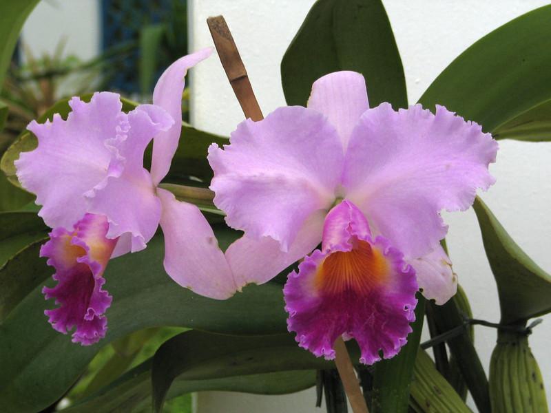 126 Orchids