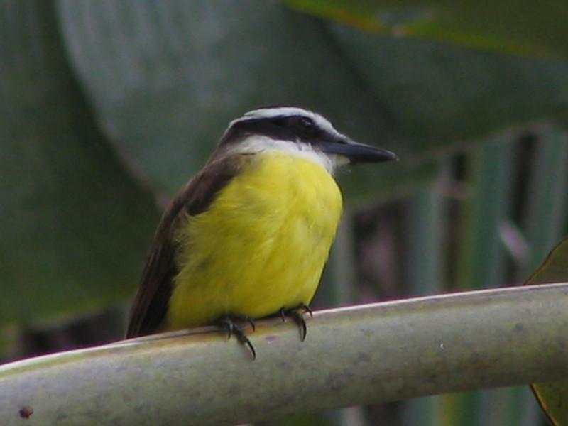 123 Yellow Bird
