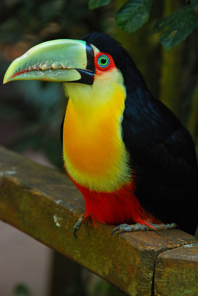 Parque das Aves bird zoo,  Foz do Iguazu