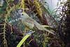 Palm Tananger......(RLT_1816)