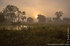 Early Morning in the Pantanal