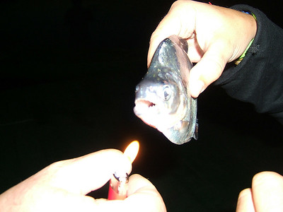 Day 2 - Manaus - A piranha! Javi (the Spaniard) is holding his lighter up so our camera could somewhat focus in the dark.