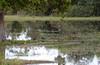 Swamp in the Pantanal