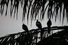 Wake-up call in the Pantanal