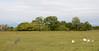 Pantanal grassland