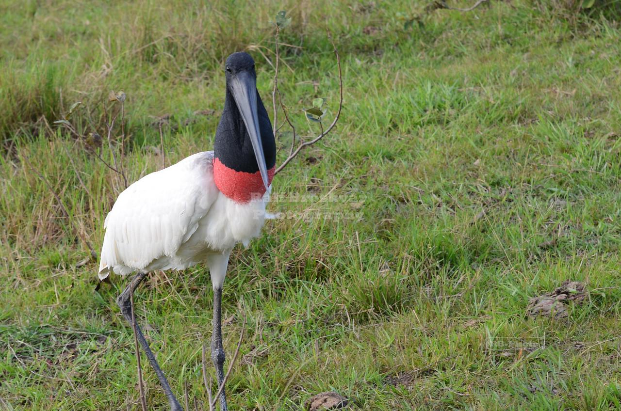Curious Stork