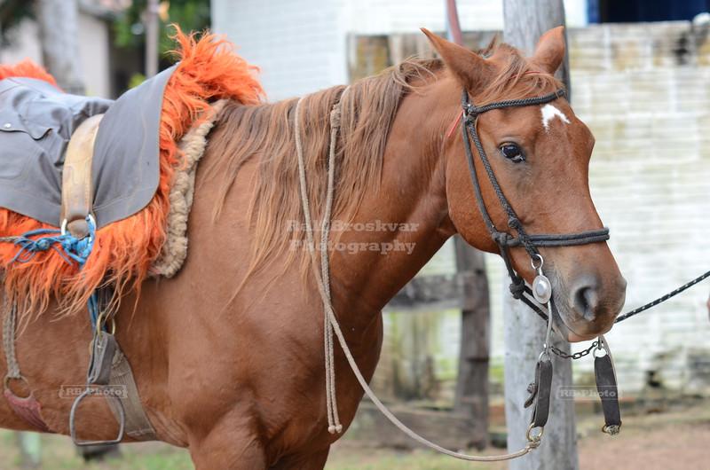 Who needs a saddle?