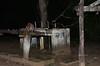 Ocelot at night