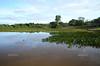 Lagoon in the Pantanal