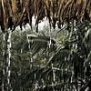Taken at the Amazon River, Brazil, during the rainy season. This shot shows heavy rain falling amongst palm trees
