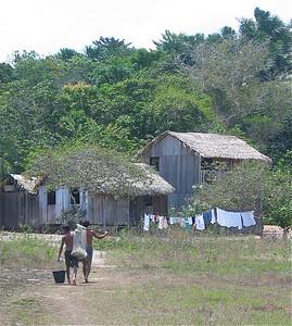 FLONA National Park, Amazone, Brazilië.