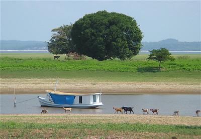 Droogte in de Amazone. Het water stond 6 meter lager dan normaal. Canal do Jari, Brazilië.