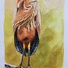 Drawing of purple heron by Francois Desbordes