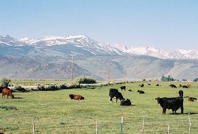 7/6/05 Pastures off Twin Lakes Rd. Bridgeport region, Eastern Sierras, Mono County, CA